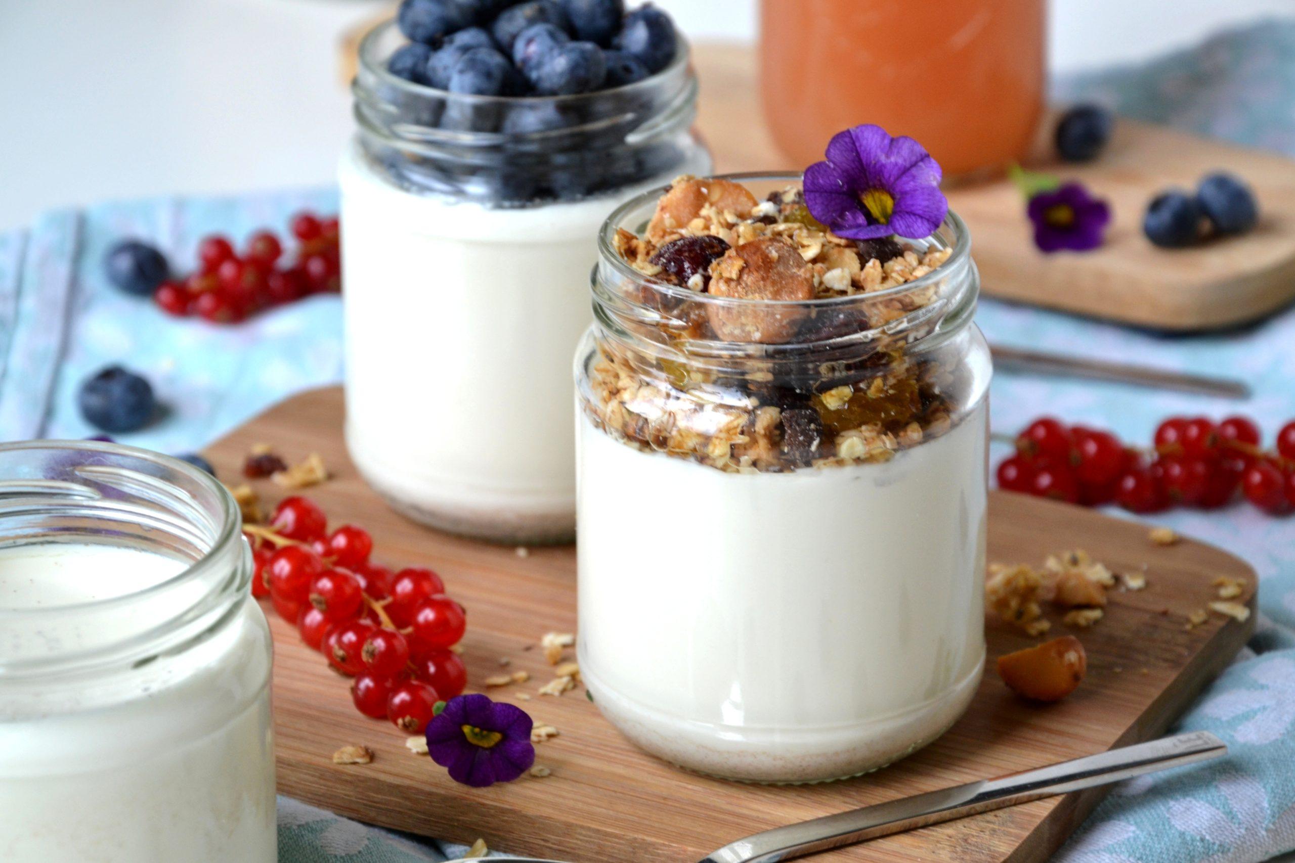 Yaourts maison au lait de brebis & vanille